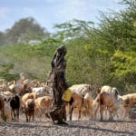 Building Economic Growth and Resilience in the Borderlands of the Horn of Africa